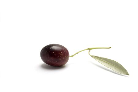 one olive on branch isolated in white background