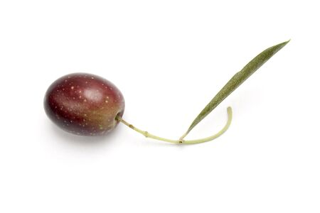 one olive on branch isolated in white background photo