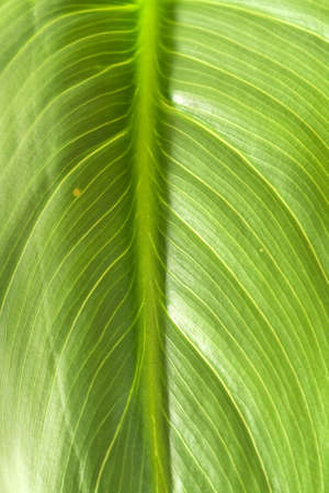 A green leaf filling the frame in the vertical