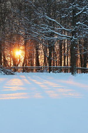 A scene of a bright orange sunset seen between trees without leaves, covered with snow in its branches and on the floor Stock Photo