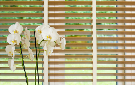 a orchid plant with plenty white flowers in front of a blurred window with brown wooden blinders slightly open forming light green stripes.