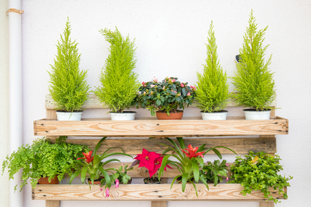 wood shelf with many colorfull flower pots disposed in a beautiful way.