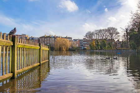 Old wooden fence full of moss inside of the lake in a british park with a pigeon sitting on top of it. Stock Photo
