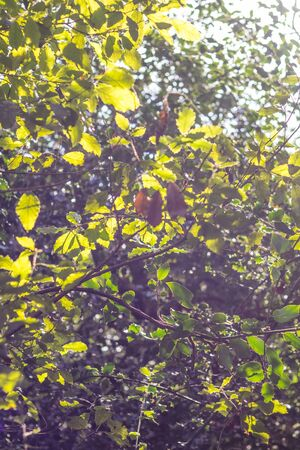 Back litted leaves from a tree given a very bright green color to them on a vintage tone