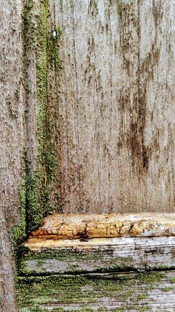 Lichen on old teak doors with moisture. Stock Photo