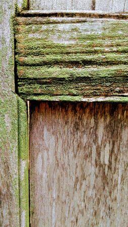 Lichen on old teak doors with moisture. Reklamní fotografie