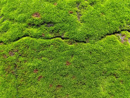 Green moss on the floor and damp wall. Stok Fotoğraf