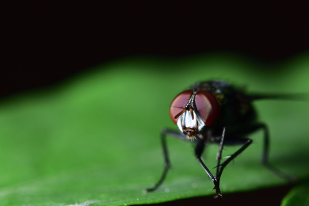 The fly is green on the body. 스톡 콘텐츠 - 109032857