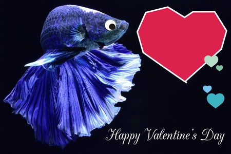 Valentine's Day card with a heart on a betta fish background Put the text on the heart, suitable for a Valentine's Day card.