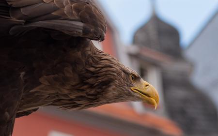 lovebirds: a flying eagle lake in Bad Langensalza Thuringia