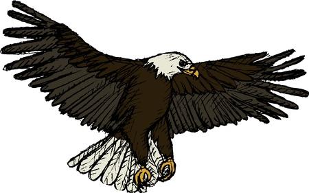 eagle flying: Vector illustration of flying eagle