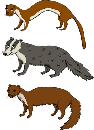 weasel: Set of Mustelids - Weasel, Badger, Marten