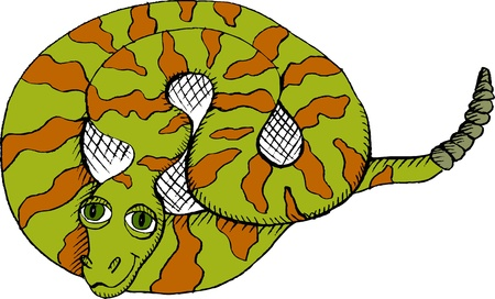 coiled: Vector illustration of coiled rattlesnake