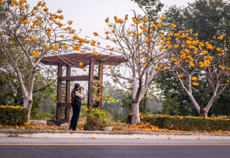 woman with camera taking pictures of flowers trees Stock Photo
