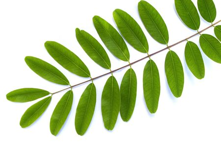 compound leaf on white background Stock Photo