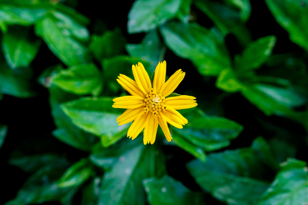 top view of yellow flower on green natural background Imagens