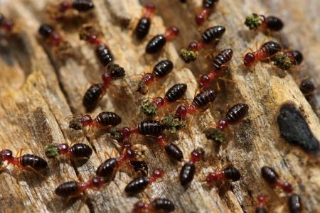 termite: Termite Stock Photo