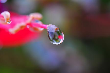 dewdrop: dewdrop on the flower