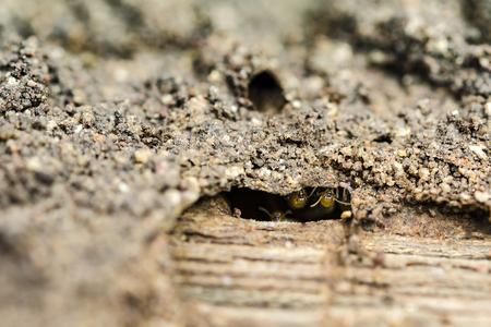 nuisance: Close up termite selective focus