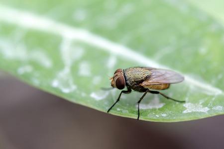 close up: Close up fly on leaf