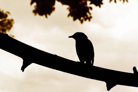 Silhouette Vogel auf Zweig