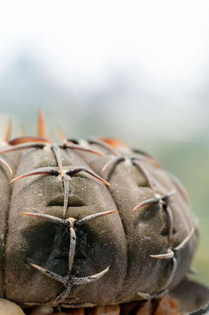 buliding: Close up black cactus on pot with  office buliding background