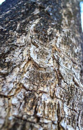 sere: Sere plain wood on Tree