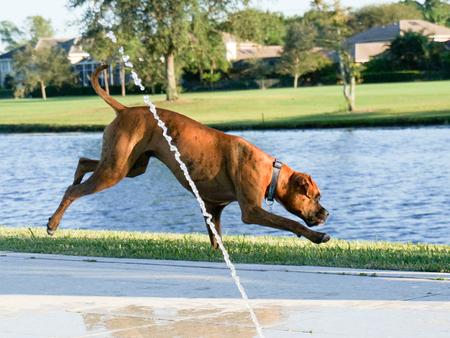 animal sad face: dog jumps in yard