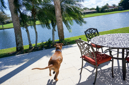 brown dog runs away from camera in a tropical setting Stock Photo