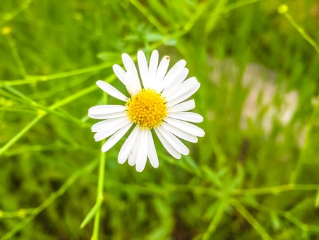 simple purity flowers: white flower with yellow center