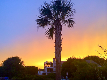 One Palm Tree and beautiful sunset sky in Charleston Stock Photo