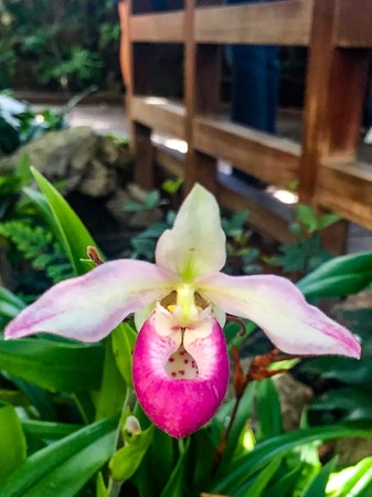 pink and white orchid that looks like it has a face