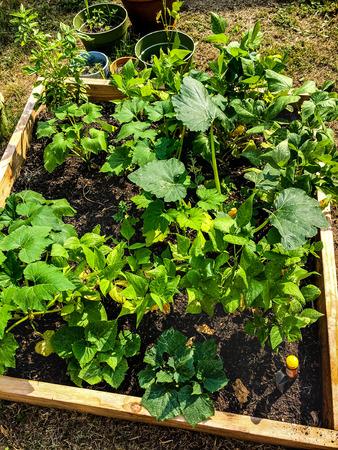 vegetable container garden in backyard
