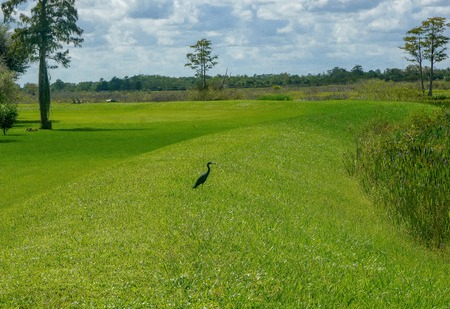 small black bird standing in the swamp Stock Photo
