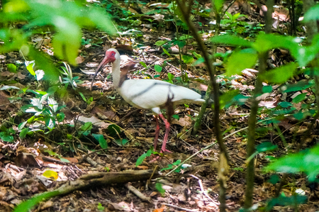 white bird with orange beak and legs in a jungle