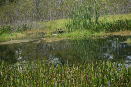 birds wading in the waters of a wetland Stock Photo