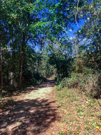 forest path on Theodore Roosevelt Island