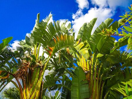 royal palm trees on a clear day