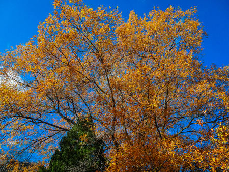 looking up at yellow, orange and red foliage