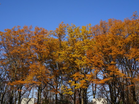 hardwoods: looking up at yellow, orange and red foliage