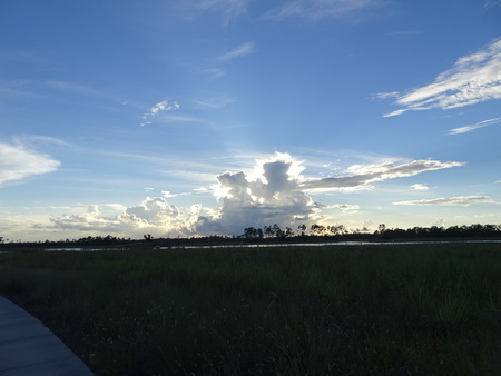 sunset at Pine Glades Natural Area in Florida Swamps