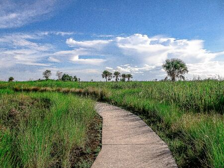 walking path in the marshes Stock Photo