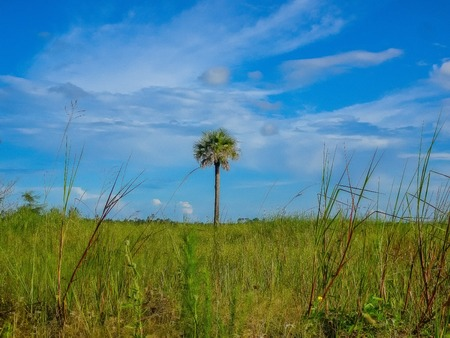 palm tree in a field of green grass on a summer day