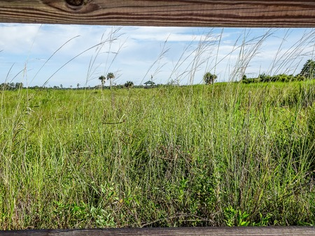 summer day with blue skies in the marsh of Florida