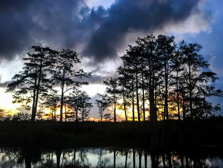 Reflection of sunset in a cypress swamp Stok Fotoğraf