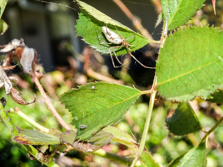 spider on a green leaf on a summer day