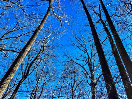 Bare branches and blue skies in the woods of Washington D.C.