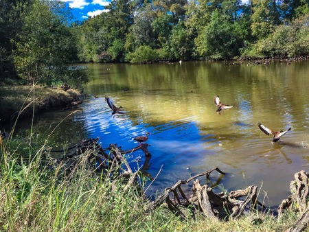 birds in the pond at Audubon Park in Louisiana Stock Photo