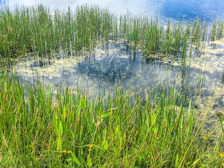 daytime in the swamps of Louisiana and Florida