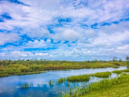 blue sky and green grass in the marsh